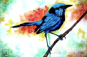 Fairy Wren-Watermark